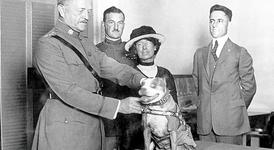 Стъби - кучето герой