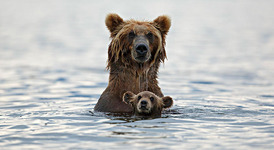 Сладки родителски моменти при животните
