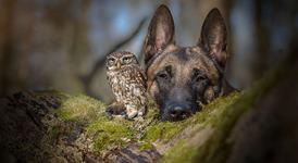Невероятно приятелство между куче и бухал