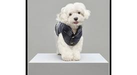 Moncler помисли за любимците с колекция кучешки якета
