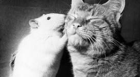 Приятелства между котки и мишки